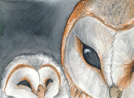 Barn owl and chick by Bjekkergauken