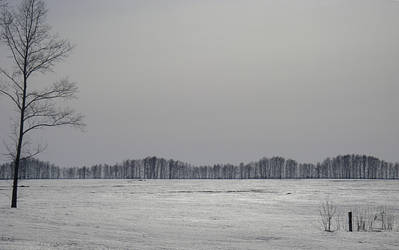 sinusoid forest by vasaka