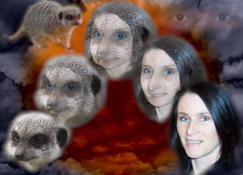 Meerkat Morph by Lolalot17