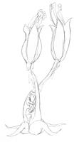 Phlegm Roses by Extermanet