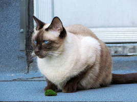 Guarding My Moss Pebble by Kitteh-Pawz