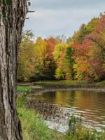 Autumn's Around the Corner by Kitteh-Pawz