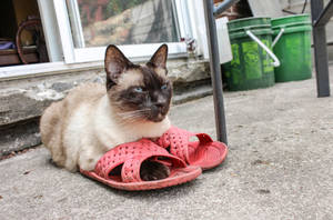 Misha's Garden Slippers by Kitteh-Pawz