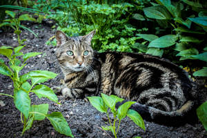 The Plant Guardian by Kitteh-Pawz