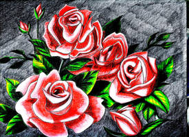 Roses by becloud