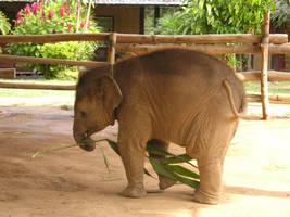 Baby Elephant by ryhei