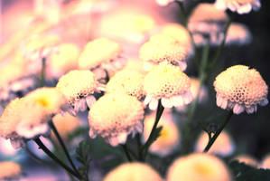 Field of flowers by PhotosByMeR93