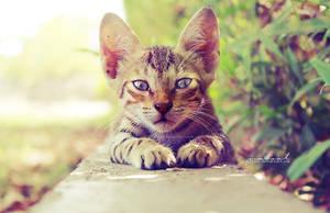 polite cat by na3sat