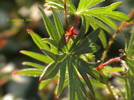 Leaf Of Life by enimsa