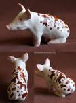 The Wonder Pig by gescheitert