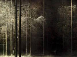 Forest by lukpazera