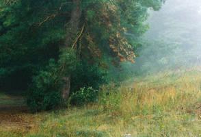 Foggy morning II by lukpazera