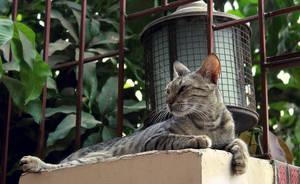 Wild Cat by salmanlp