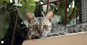 Wild Cat 2 by salmanlp