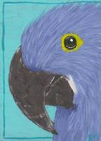 Hyacinth Macaw ATC by LuvLoz