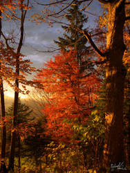red autumn by MadMike27