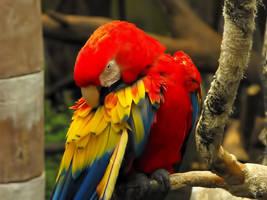 Parrot by RosleinRot