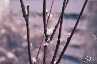 winter tree by Beommie