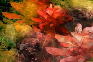 Orange Rose by Robincanada