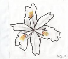 Iris by conclav1an