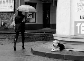 Alone dog by korzar