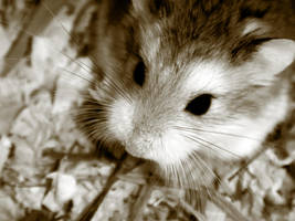 The Hamster by maloudt