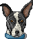 Bull terrier head pixel art - Apollo by Angi-Shy