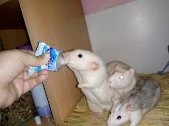 Sweet milk time by Angi-Shy