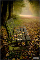 A bench to wait spring by thezulu