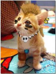Punk cat by silver-angel