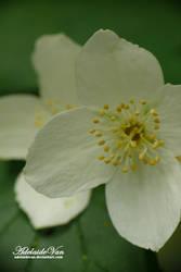 Kwiat-Flower by AdelaideVan