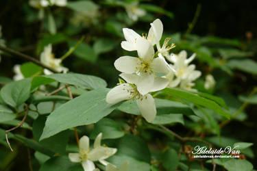 Kwiat-Flower 2 by AdelaideVan