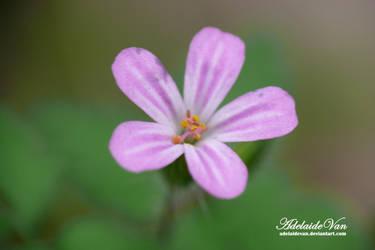 Kwiat-Flower 3 by AdelaideVan