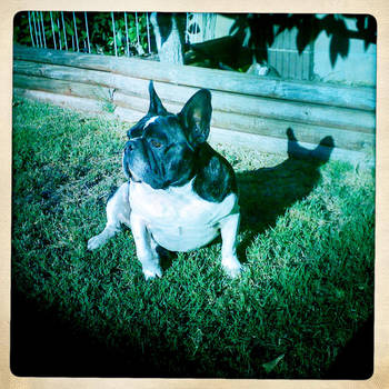 Always Watching by Kitishane