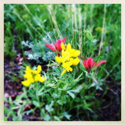 Flowers 01 by Kitishane