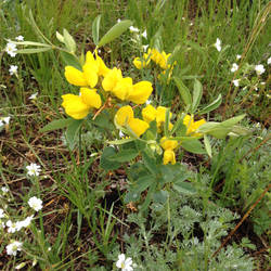 Flowers 02 by Kitishane