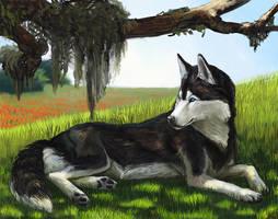 Husky Afternoon by wylieblais