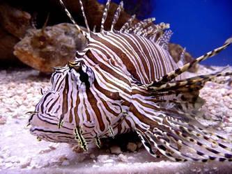 Lionfish by ceemdee