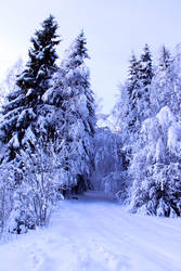 snow path stock by conceptually