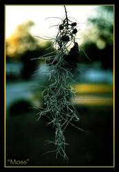 Moss by DefaultFaith