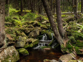 forest stream and falls by rtry