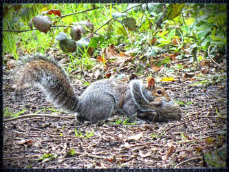 Squirrel having the baby in its mouth by 4dpaul