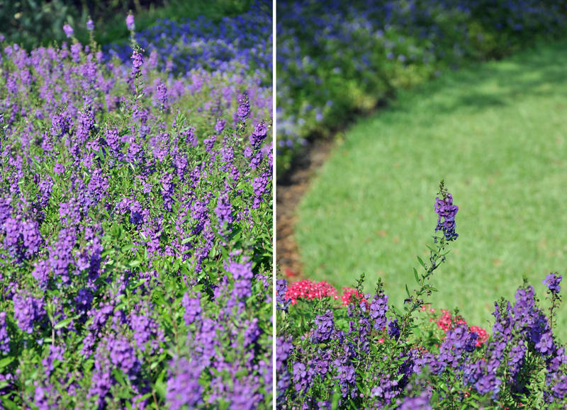 Flower Bed -diptych- by sara-satellite