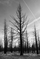 Dead Forest by scopic-pulsion