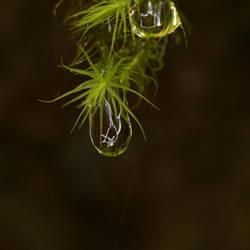 Droplet by Drumlanrig