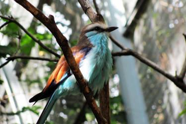 Feathered blue by ElvishPirateGypsy