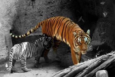 Tiger Tiger by ElvishPirateGypsy