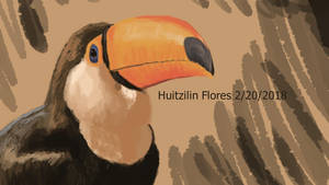 Toco Toucan study by XStreamChaosOfficial