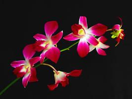 Flower by viva100