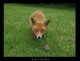 Fox Of The Glen by kansukai